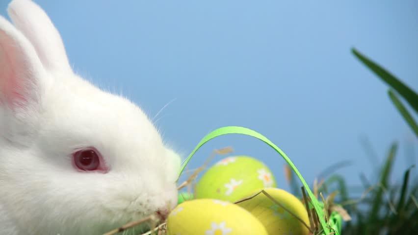 bunny rabbit sniffing around - photo #23