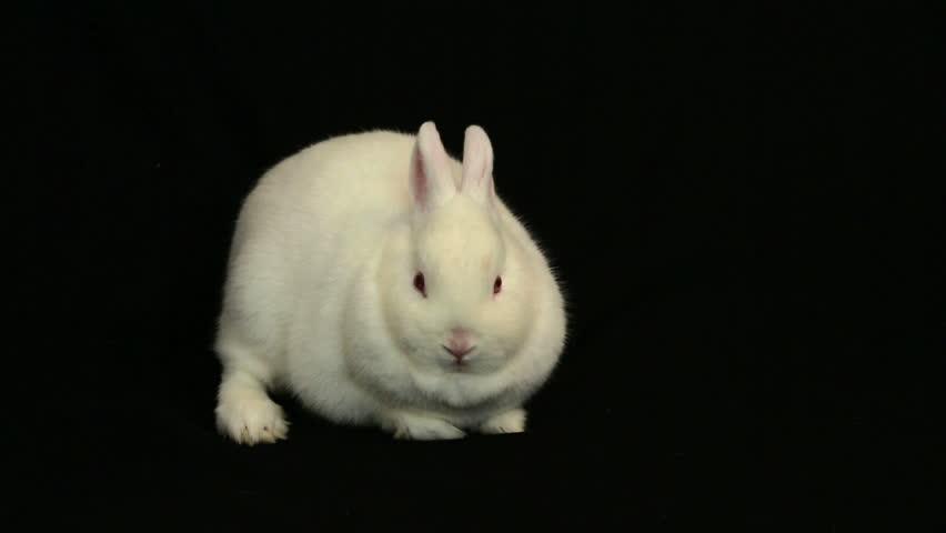 bunny rabbit sniffing around - photo #17