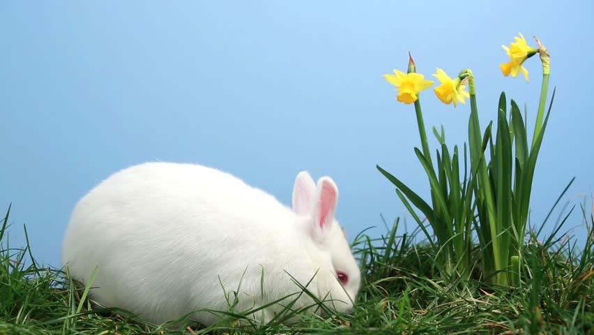 bunny rabbit sniffing around - photo #7