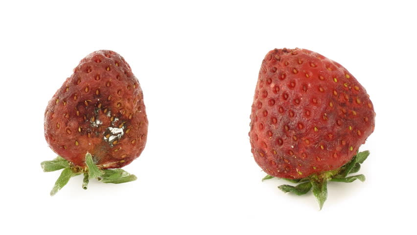 Timelapse of strawberries rotting over white background.