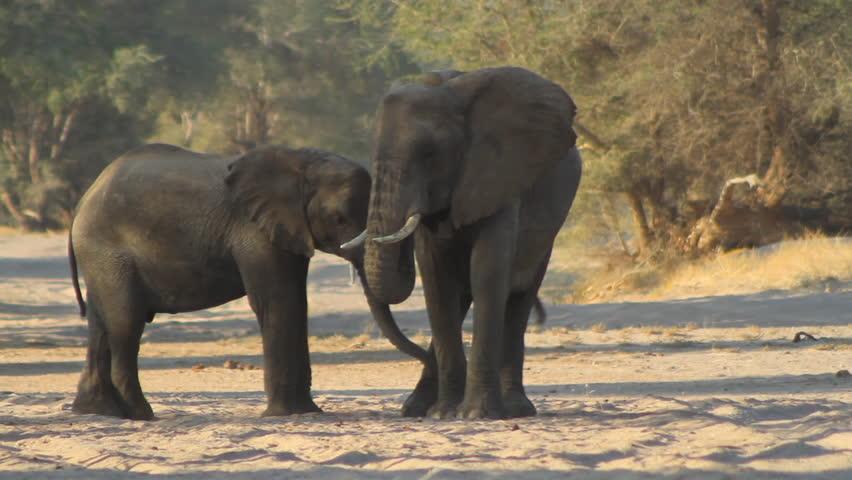 Elephants up close   Shutterstock HD Video #3573494