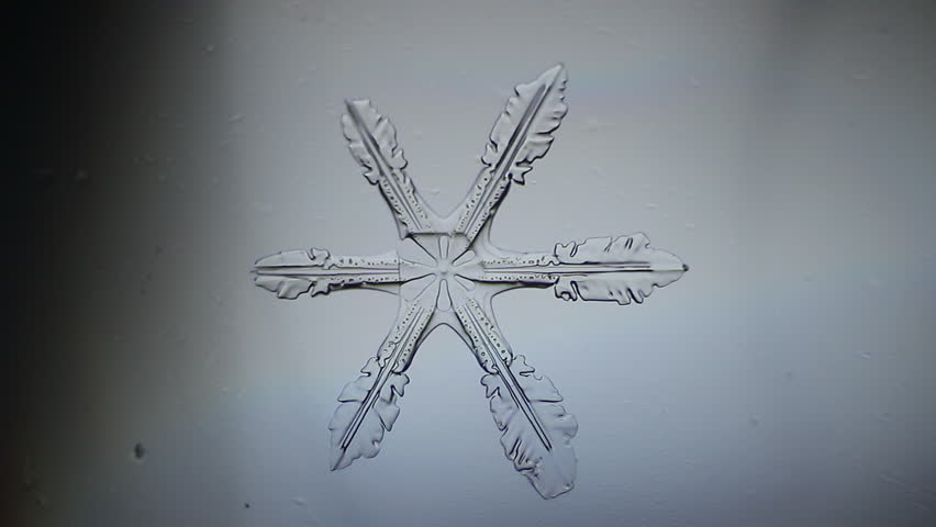 Snowflake appear, micro shot - HD stock video clip