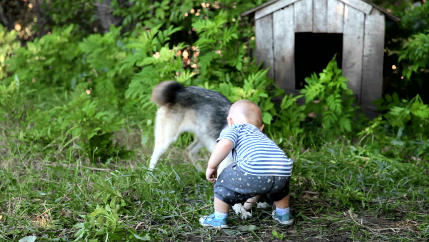 child playing with east siberian laika in the yard - HD stock video clip