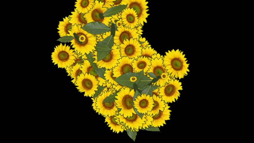 Sunflower Effects - HD stock video clip