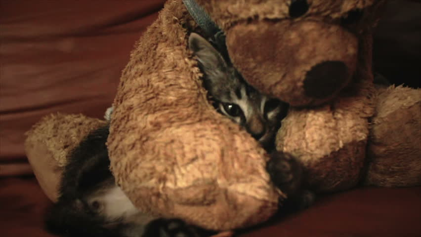A grey kitten hiding in a teddy bear | Shutterstock HD Video #3700214
