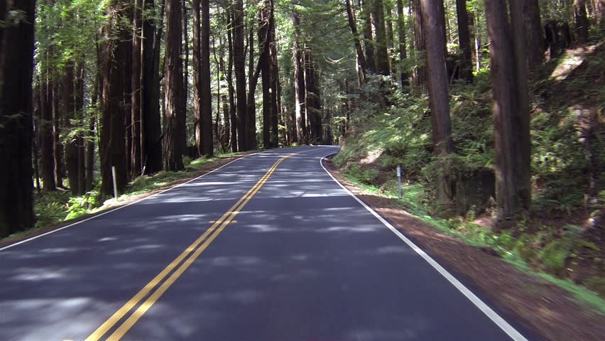 Driving through redwood forest POV fast timelapse. Sequoia National Park Sierra Nevada mountains. Established 1890. 404,063 acres. The park is famous for its giant sequoia trees, worlds largest trees. - HD stock video clip