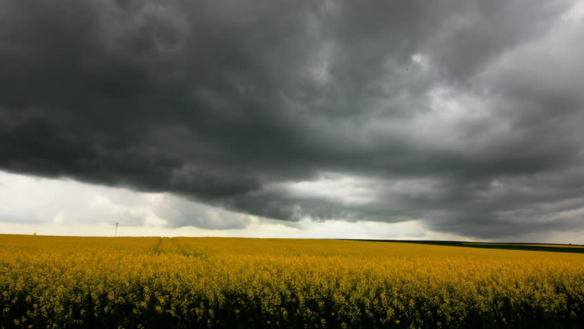 Black clouds and heavy rain over canola field