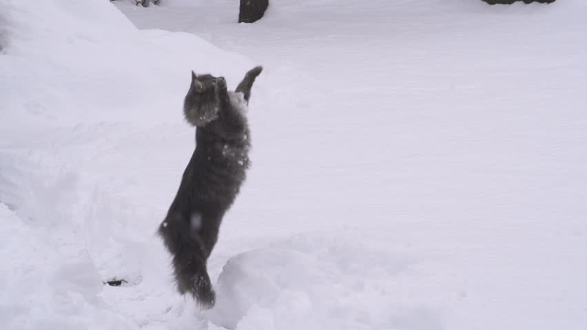 SLOW MOTION: Cat catching snowballs #3951899