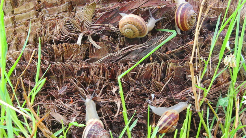 snails in grass