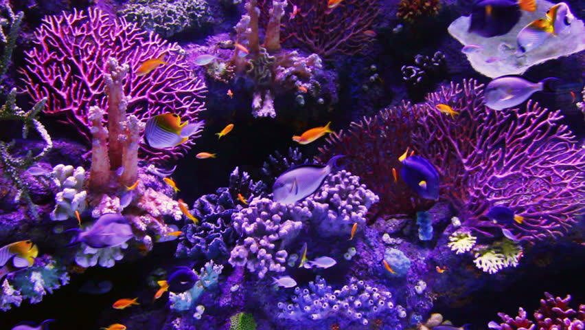 tropical fish and corals underwater - HD stock video clip