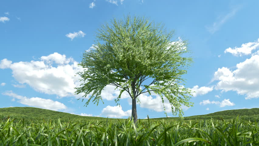 Single Tree Growing Time lapse with wind Animation