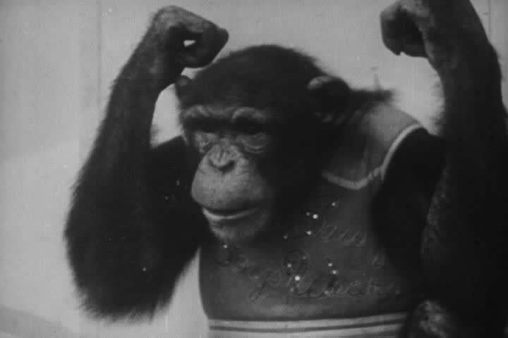 1950s - Hilarious animal antics from the 1950s.