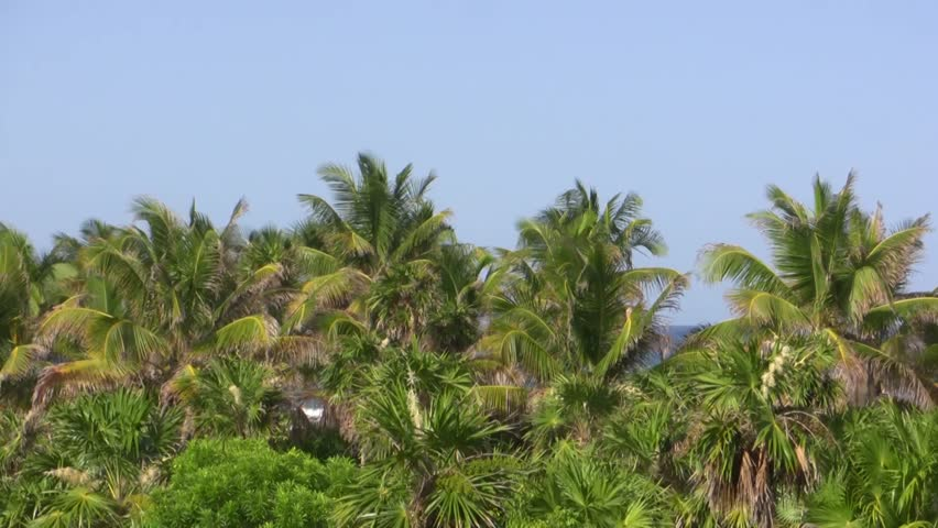 Tropical Palm Trees Pan Shot - HD stock footage clip