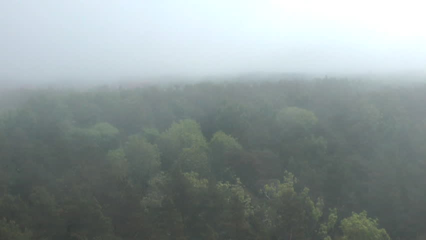 Mist rolling in over a pine tree forest.Aerial view - HD stock footage clip