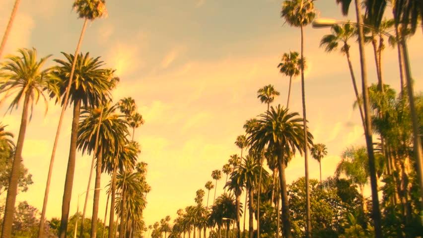 Palm trees at sunset hd stock footage video 432166 shutterstock - La ilaha illallah hd wallpaper ...
