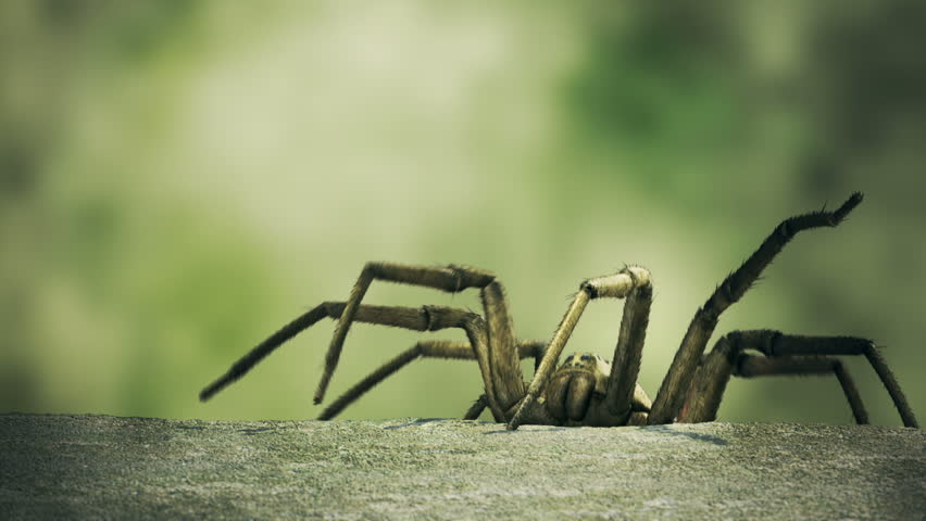 Big venomous spider climbing up to the edge of the concrete curb. - HD stock video clip