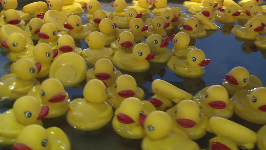 Plastic Ducks Floating around in Water - HD stock footage clip