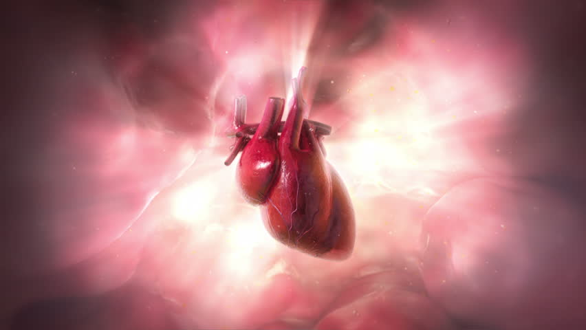Heartbeat.     