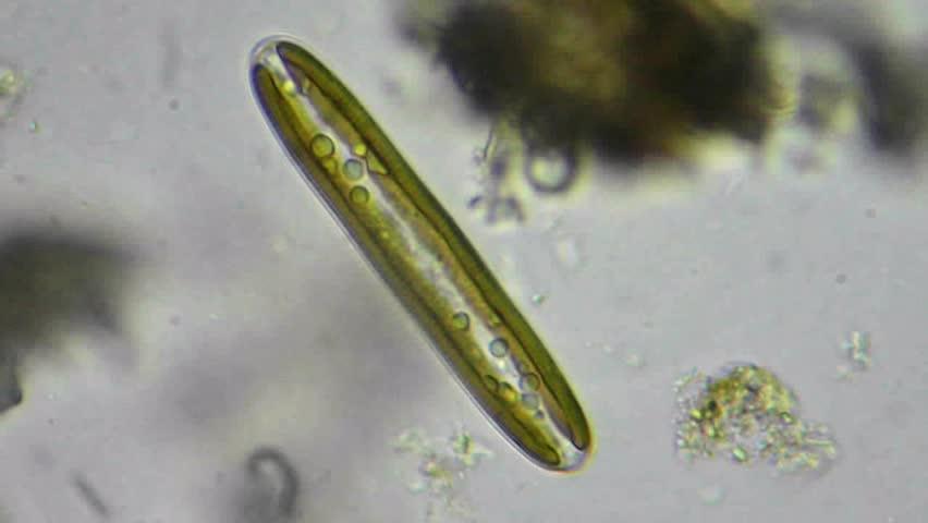 Header of alga