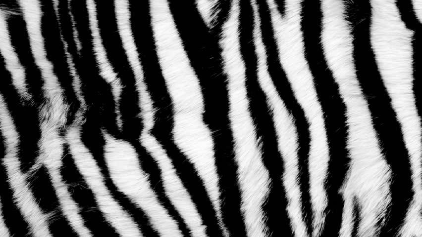 White Tiger Fur Pattern