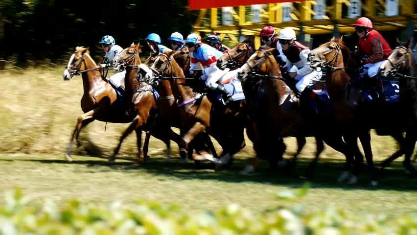 SAARBRCKEN - AUG 15, 2013: Horse racing in Germany. Part 1. Starting gate (Slow Motion)