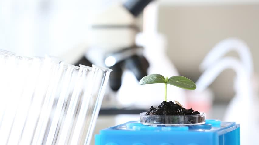 GMO plant genetics laboratory