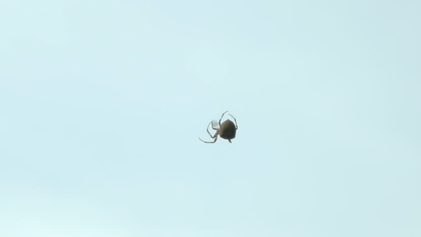 Spider on the web over blue sky | Shutterstock HD Video #4571981