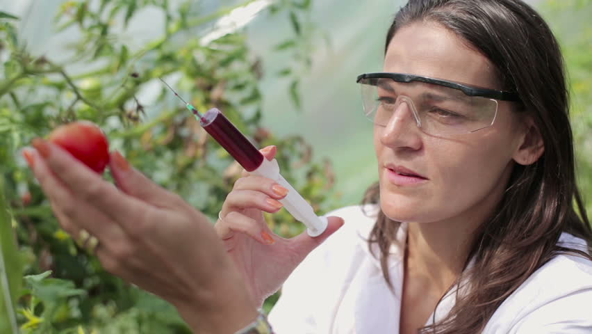 Female scientist inject substance into tomato