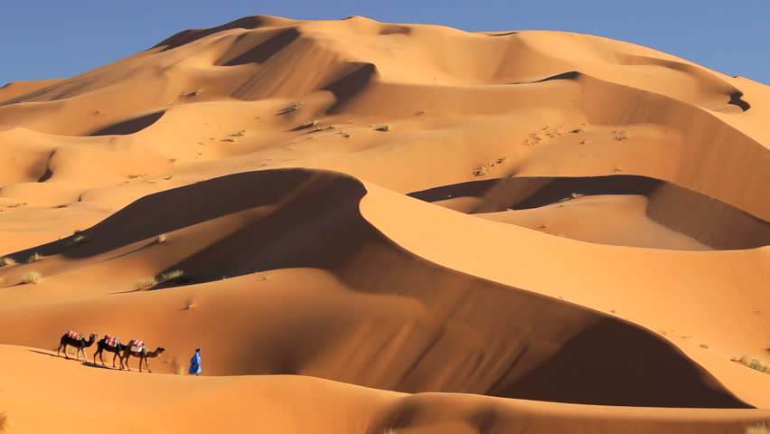 Local man in traditional tribal Touareg robes leading a group of camels in the desert near  Erg Chebbi, Morocco, Africa