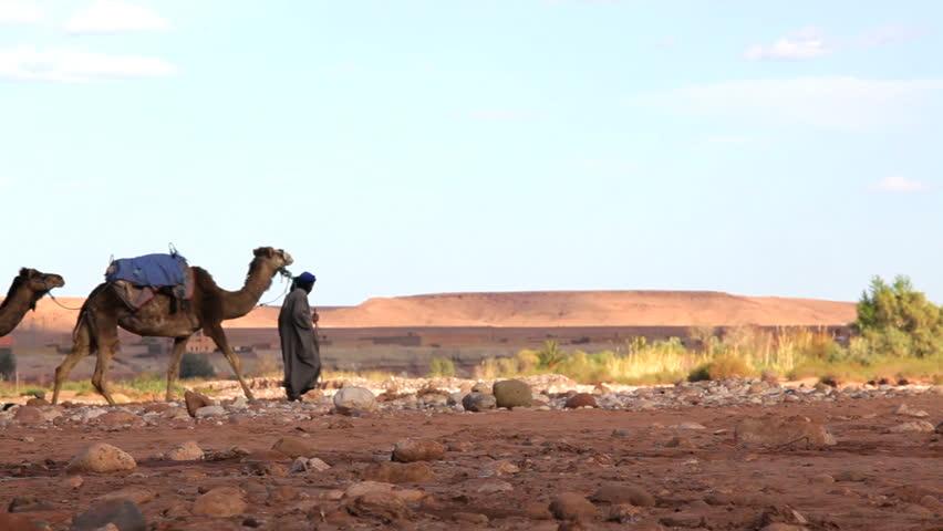 Merchant in traditional Touareg clothing leads camels through the wilderness near  Erg Chebbi, Sahara Desert, Morocco, Africa
