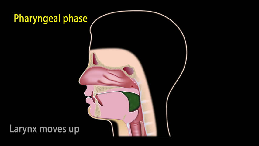 Simulation of steps of the swallowing process with text