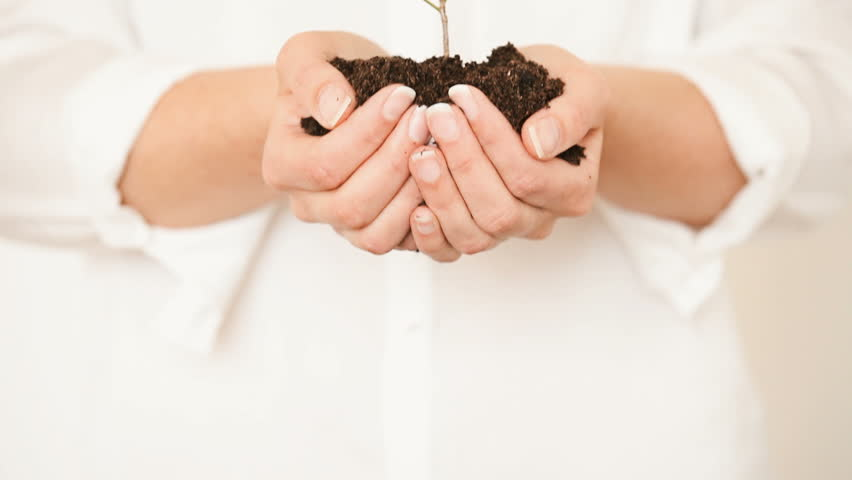 Handful of Soil with Young Plant Growing. Concept and symbol of growth, care, sustainability, protecting the earth, ecology and green environment. Caucasian female hands.  - HD stock video clip