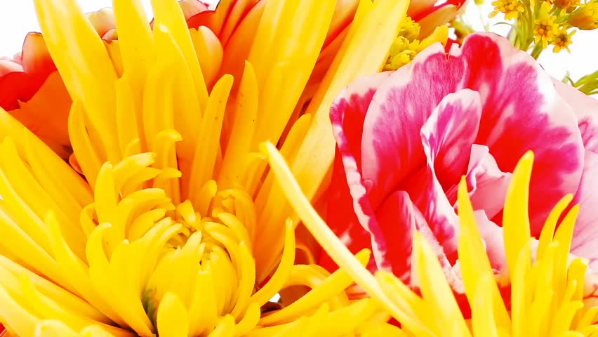 red and orange gerbera tuberose and gold mums flowers bouquet 1080p on a pure white background 1920x1080 intro motion slow hidef hd - HD stock video clip