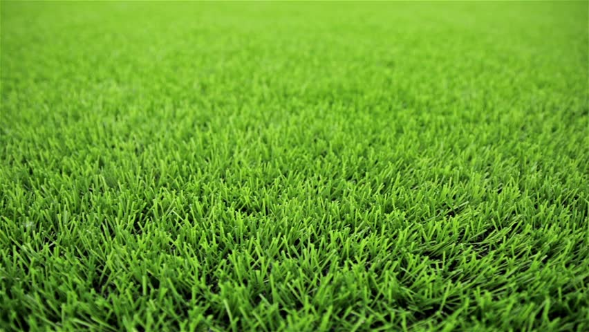 Grass field. Close-up, horizontal slider shot | Shutterstock HD Video #4714523