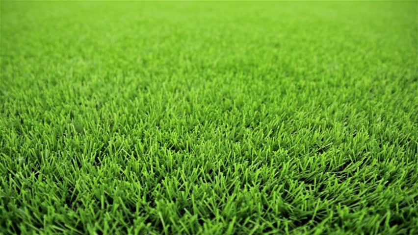 Grass field. Close-up, horizontal slider shot