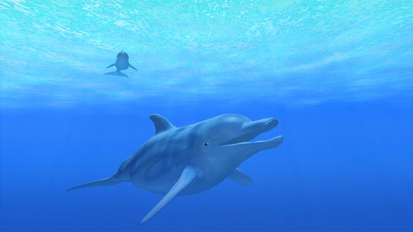 Ocean Dolphins. - HD stock footage clip