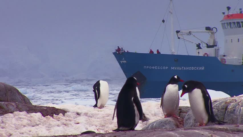 ANTARCTICA-CIRCA 2012-An oceanic research vessel floats amongst icebergs in Antarctica as penguins look on. - HD stock footage clip