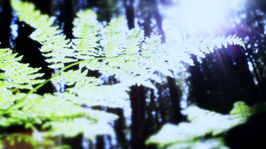 Forest Floor Fern, Glimmering Sun, Dolly, Tracking - HD stock video clip