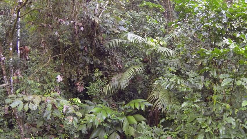 Borneo Guide