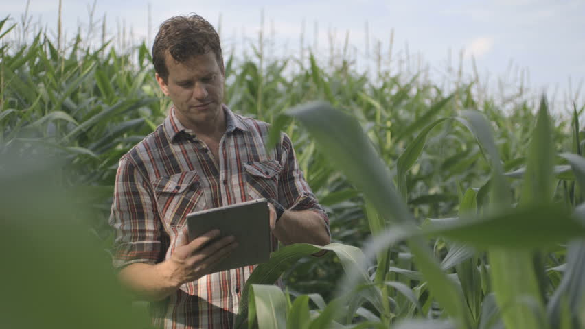 Mature Male Farmer n standing and using digital tablet in corn field