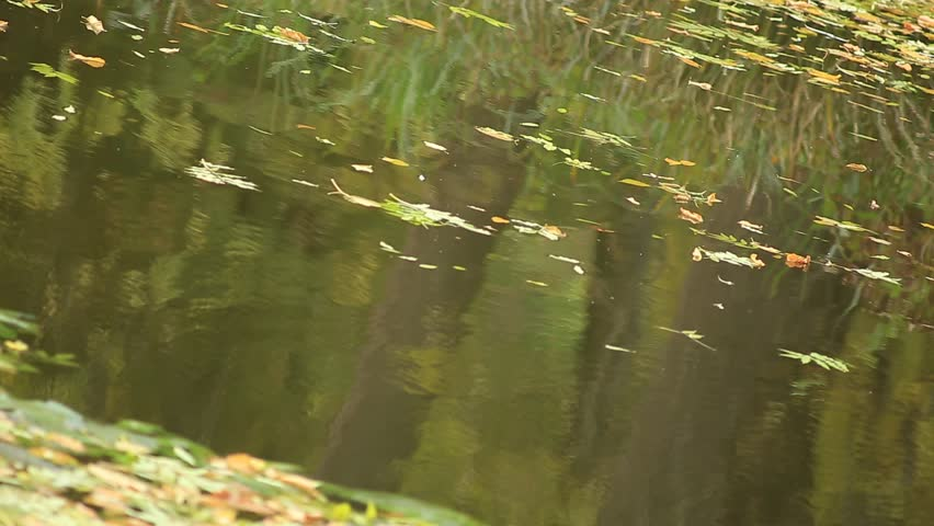 wood reflections in water - HD stock footage clip