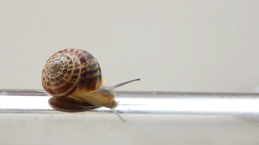 snail moving on metal tube