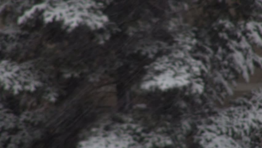 Snowing in Night, Snow Fall, Christmas Scene, Winter View Snow Storm, Blizzard - HD stock video clip