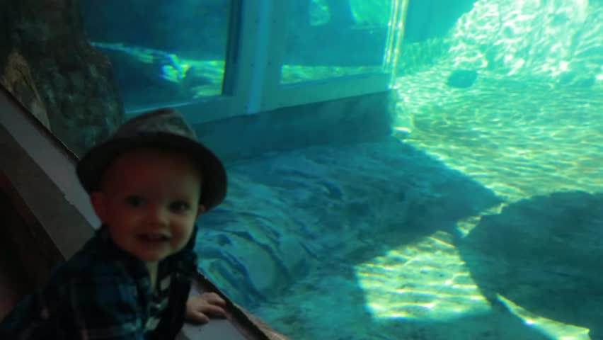 A little boy watching the seals at the zoo aquarium