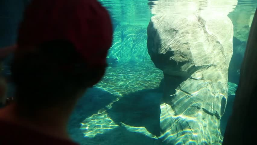 A small family watches the seals in an aquarium at the zoo