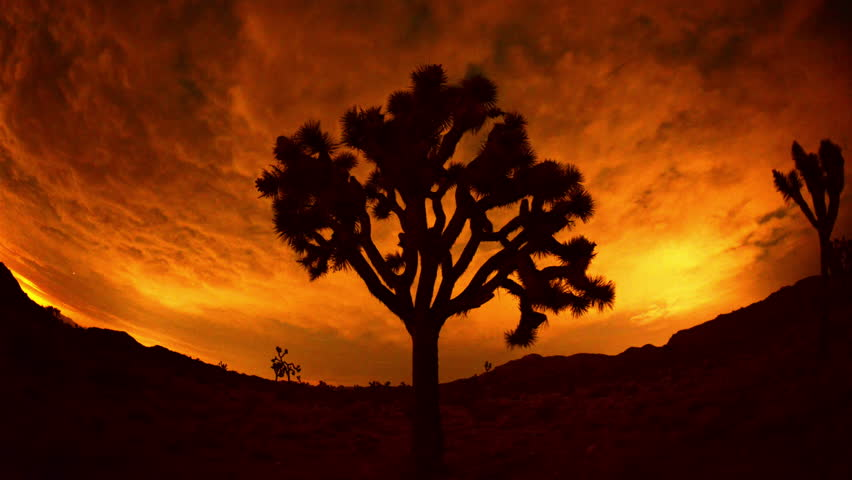 Time Lapse of Joshua Trees at Night - 4K, Ultra HD, UHD resolution - 4K stock video clip