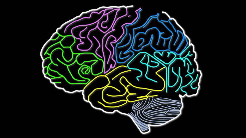 Animated human brain - photo#10