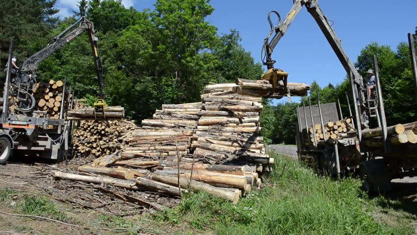 Three Log Load ~ Worker man load felled tree logs with timber crane to