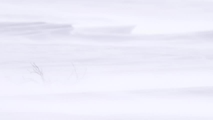Snow flurries blowing across an arctic landscape.