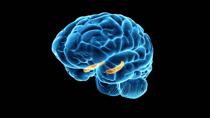 Animated human brain - photo#45